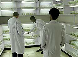 Lab for producing clean potato seed